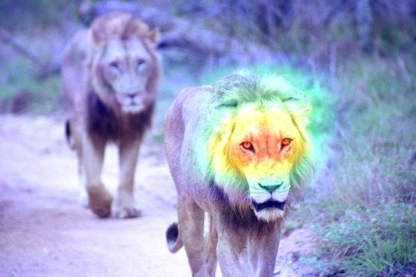 lions_cam