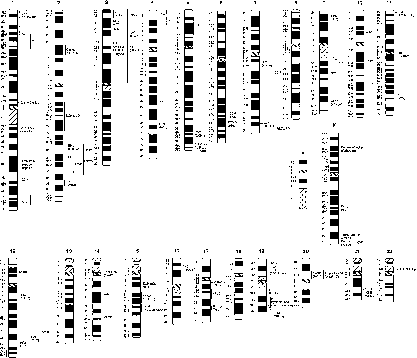 Figure 3 From Genetics Of Cardiovascular Disease