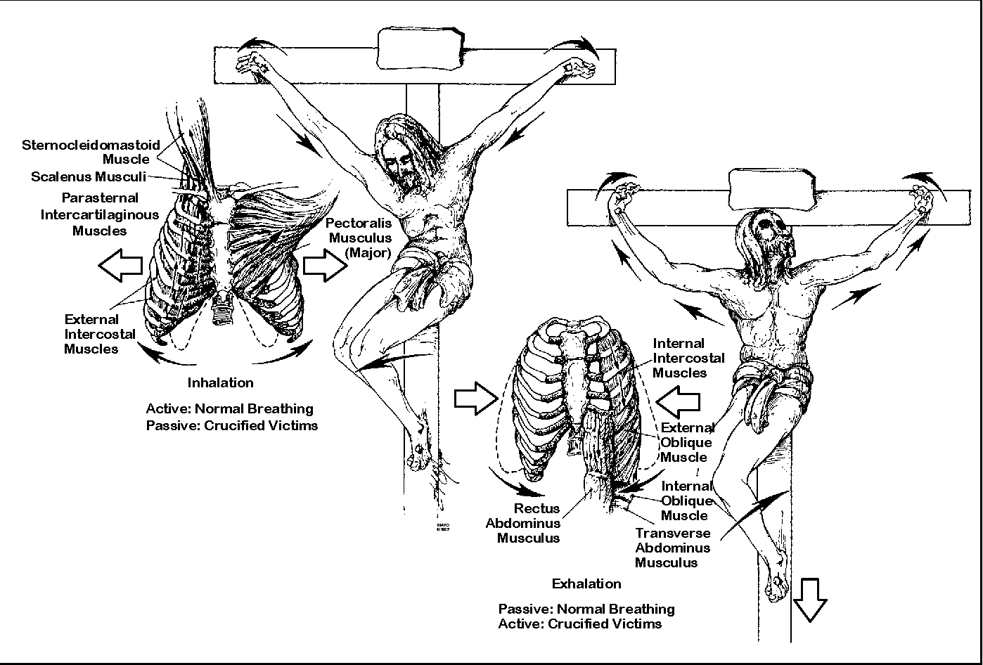 Figure 6 From On The Physical Of Jesus Christ