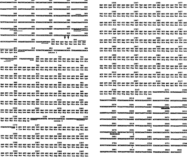 Fig 2 Nucleotide Sequence Of The N Crassafor Gene Region Noncoding