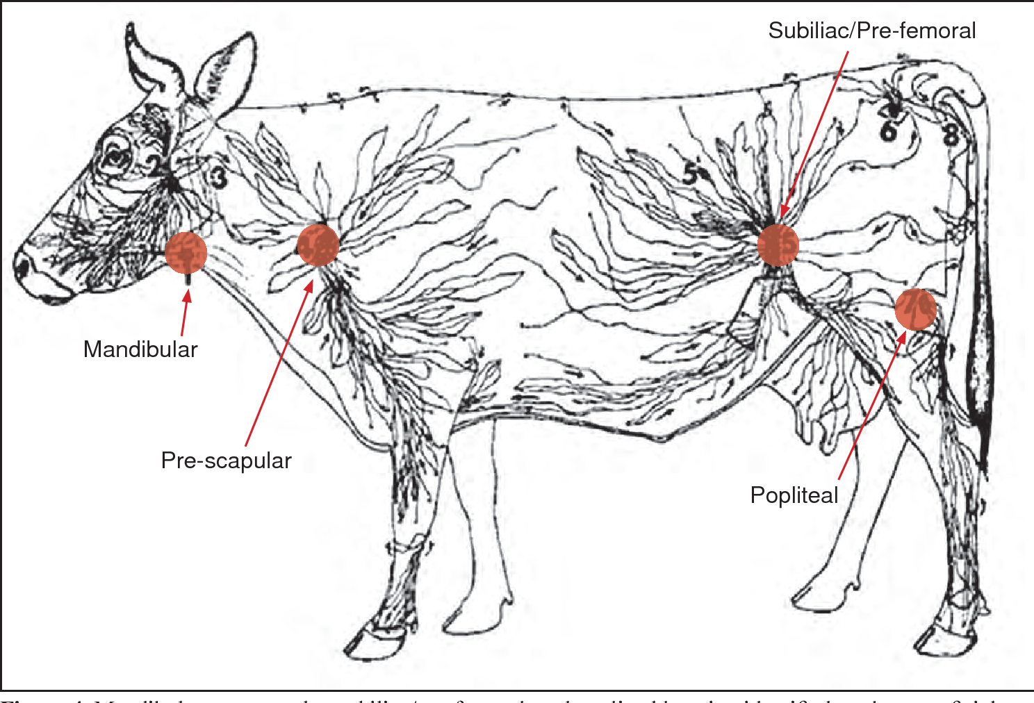 Figure 4 From Salmonella White Paper Beef