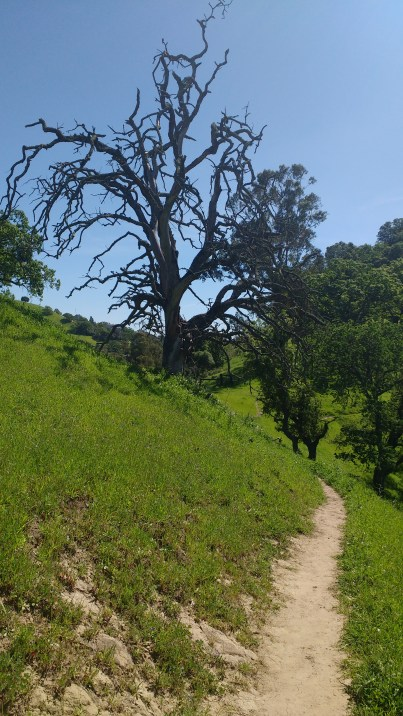 A whimsical tree (by my humble evaluation) welcomes you on the trail.