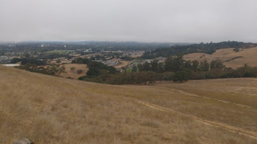A foggy day in Santa Rosa