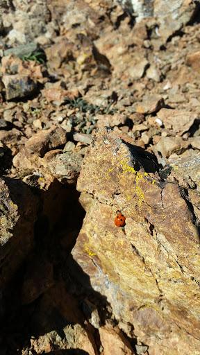 Ladybug's shell on the summit