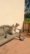 Je guette au soleil