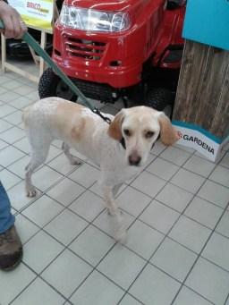 Jiska le jour de son adoption, JA du 26 mars