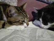 Mentalo et Luis