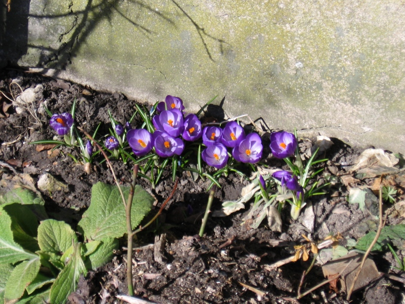 marts-31-krookus-queen-of-the-blues