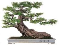 bonsai_penjing