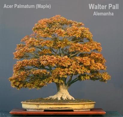 contest_hanna_walter_pall_acer_palmatum21