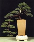 Juniperus communis - Maria Zuniga de Laville (França)