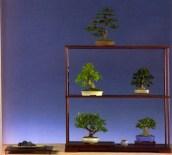 3˚ Prêmio Shohin (conjunto) Harald lehner - Picea/Potenila/Acer/Rhododendron - 28/21/22/16/19cm