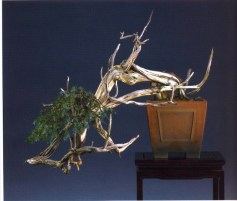 Walter Pall - Juniperus communis - Kengai 83cm Alemanha