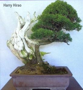 hirao-31