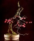 Prunus mune - 120 anos - 55cm