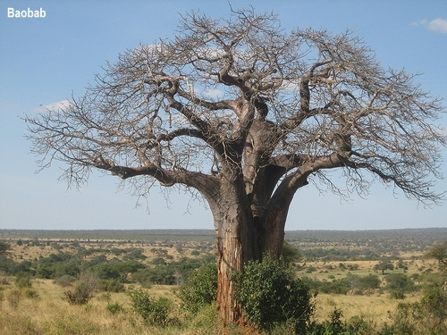 10-most-magnificent-trees-in-the-world30