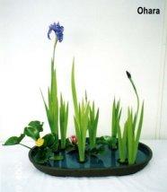 japanese flower 1