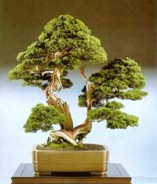 bonsai011