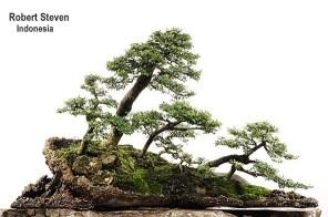 feronia-lucida-r-steven