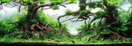 michael g w wong - enchanted forest aquascape