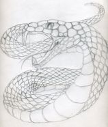snake_sketch_by_swordman16-d2yv3ps
