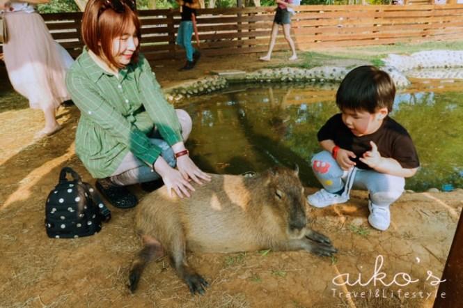 【桃園楊梅】老字號埔心牧場,竟然可以跟水豚君近距離接觸!!!