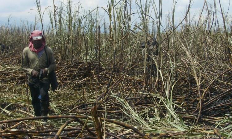 Salud laboral en la agroindustria: el desafío de los trabajadores
