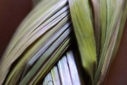 Braided Sweetgrass photo by Jamfam1000, CC BY-SA 4.0 , via Wikimedia Commons
