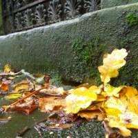 Duff House Mausoleum in Autumnal Aberdeenshire
