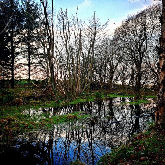 woodland sunet