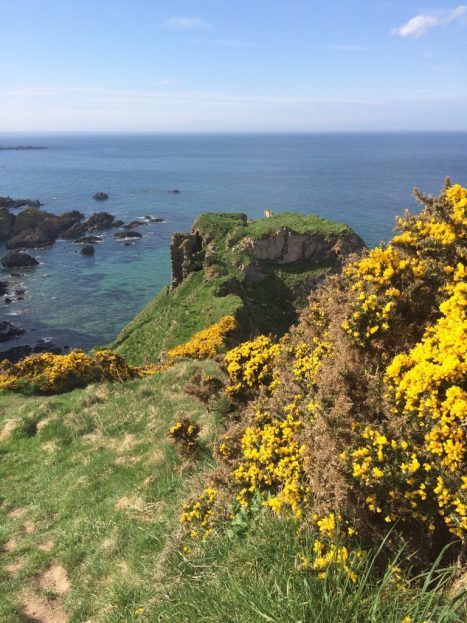 Findlater Castle and gorse on the cliffs. Ailish Sinclair | Writer