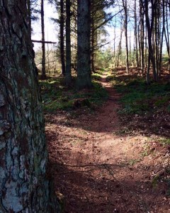 social distancing in the woods