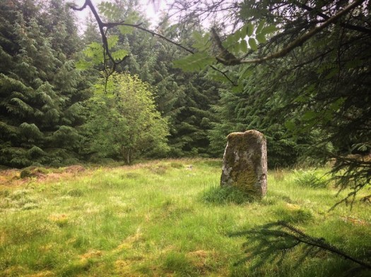 One stone from the circle in Loudon Wood