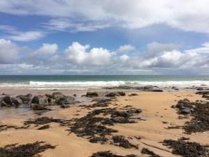 seaweed at St Combs Beach