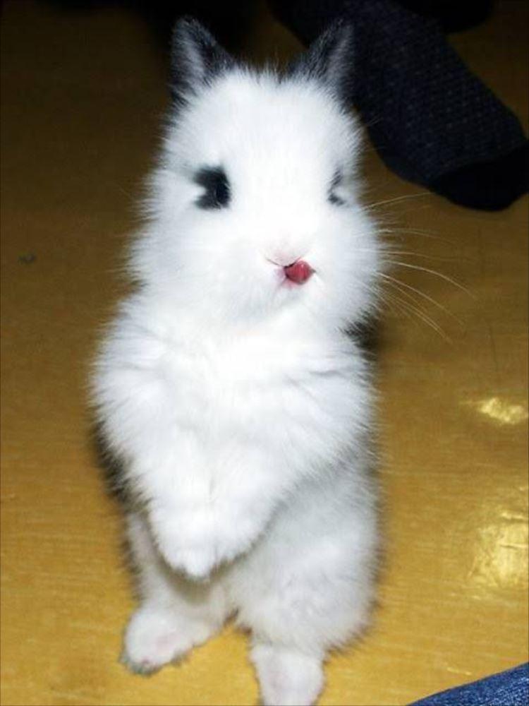 かわいいウサギ14