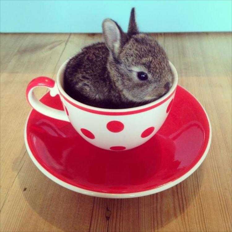 かわいいウサギ22