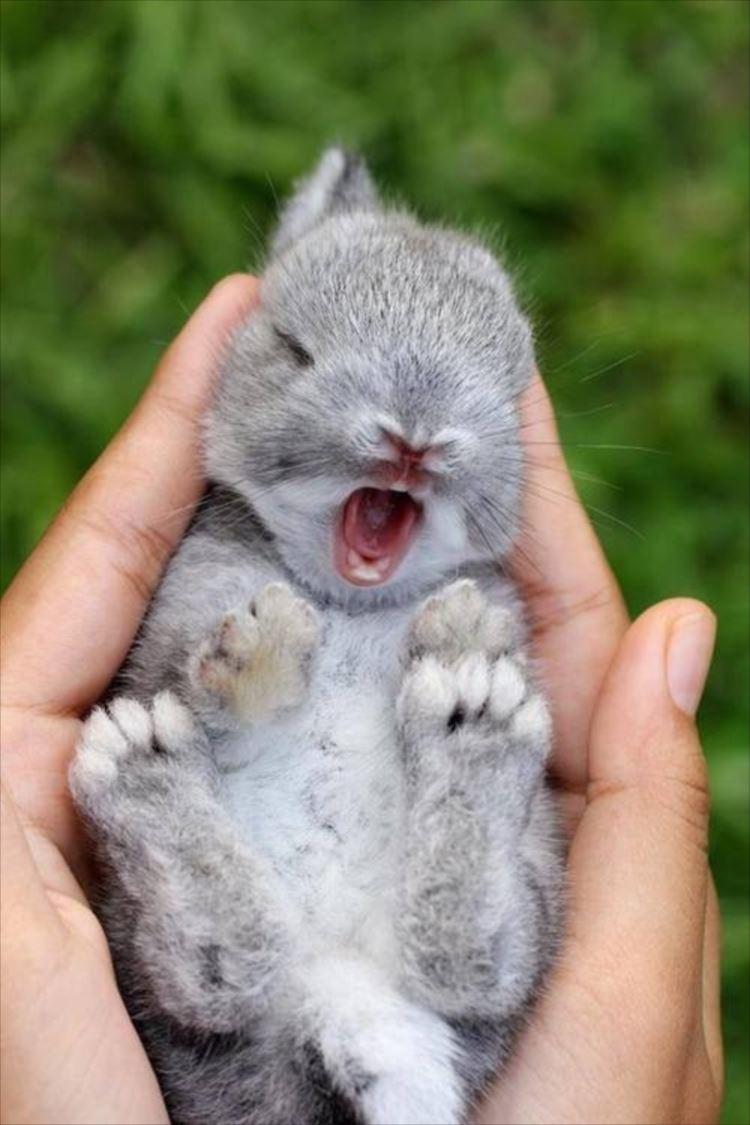 かわいいウサギ28