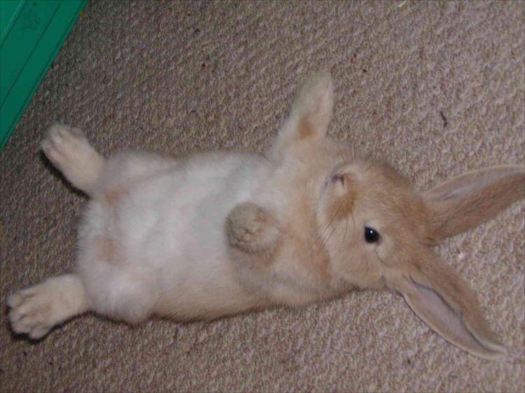 かわいいウサギ54