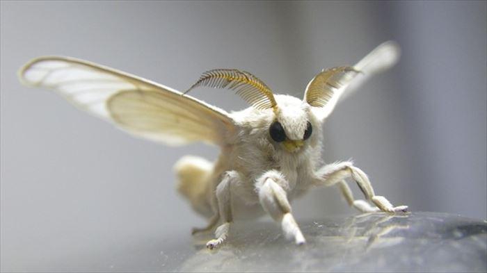 キモイ可愛い虫1