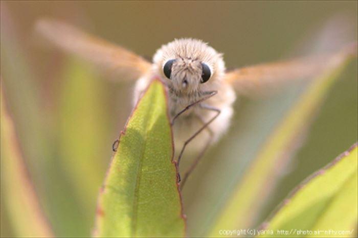 キモイ可愛い虫15