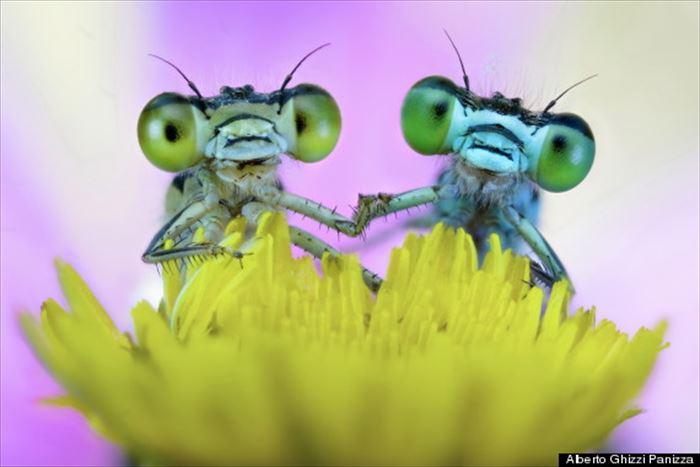 キモイ可愛い?! きもかわいい虫たち(昆虫画像50枚)