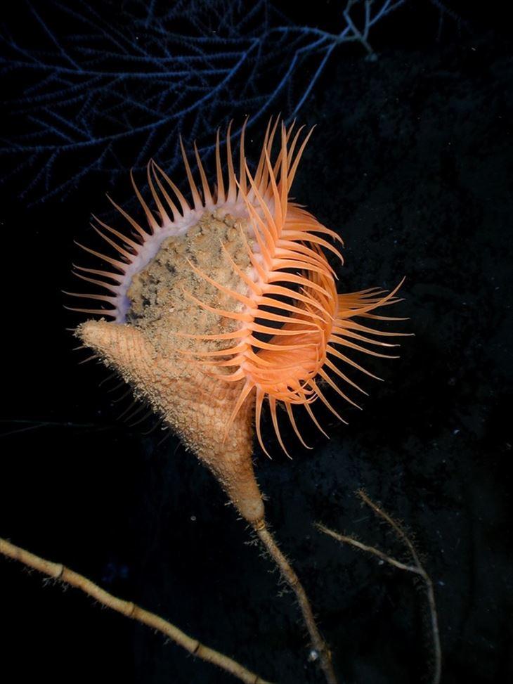 深海生物 19