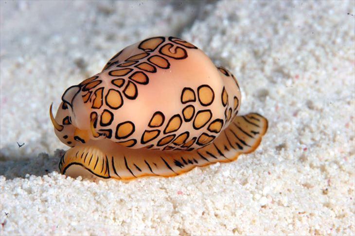 深海生物 22