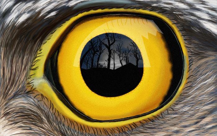 美しく奇妙な動物、昆虫の目(画像)