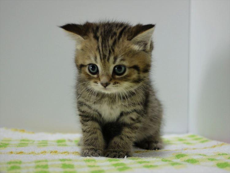 かわいい猫19