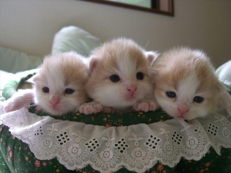 かわいい猫4