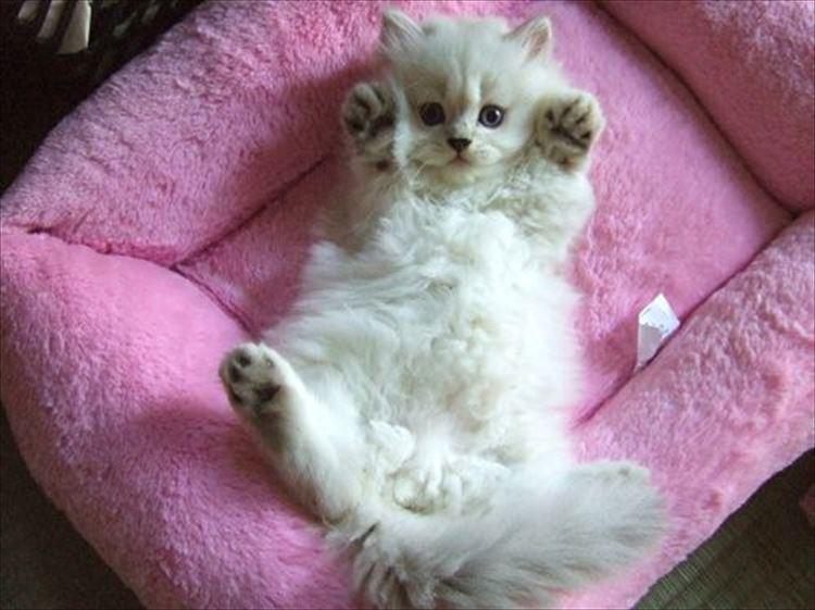 かわいい猫ベストセレクション100選(画像)