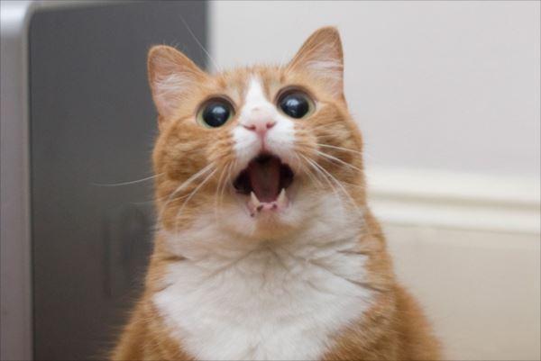 面白猫12
