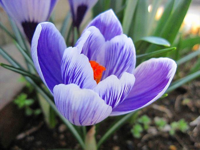 美しい花と花言葉 73