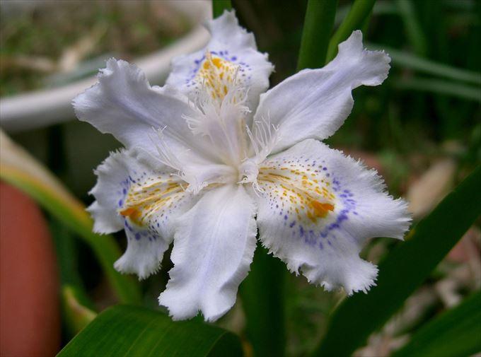 美しい花と花言葉 83